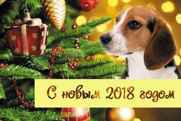 С Новым 2018 годом жёлтой собаки!