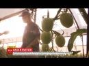 Зрошування та спеціальні комахи як ізраїльтяни навчились вирощувати овочі та ф