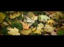 Anthony Hopkins. Осень под вальс Энтони Хопкинса.