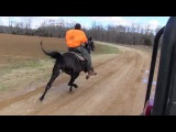 SOLD Fast Black Standardbred Mare FOR SALE - Jacob Parks Horsemanship
