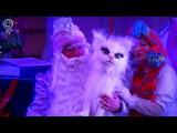 Дед Мороз вернулся в детство. В Областном театре кукол стартовал новогодний мар ...
