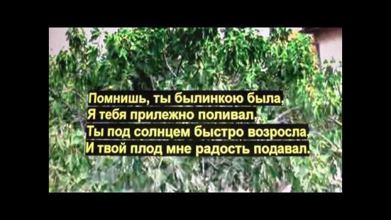 Песня Под горой Смоковница растёт
