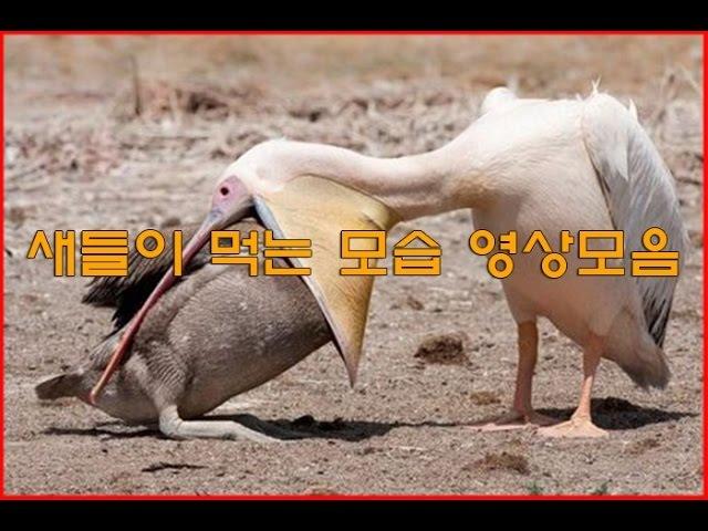 새들이 먹는 모습 영상모음