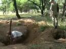 Особенности охоты на кабанов