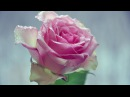 Светлана Астор ~ Хрустальные розы ~Dj kriss Latvia remix