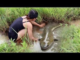 Net Fishing In Battambang Province - Khmer Cast Net Fishing -Cambodia Traditional Fishing (Part 258)