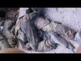 03.06.14 Прямое попадание из танка, ребята из подразделения Мотороллы
