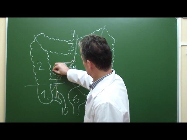 Схема кровоснабжения толстой кишки