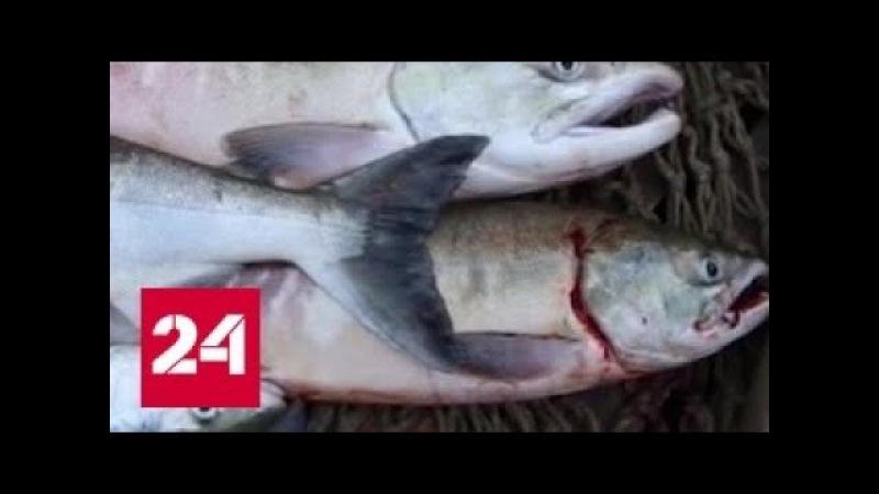 Крупные рыбопромышленники оставили жителей Приамурья без улова