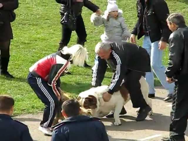 Выставка собак(подрались),стадион Перевальск-2009.mp4