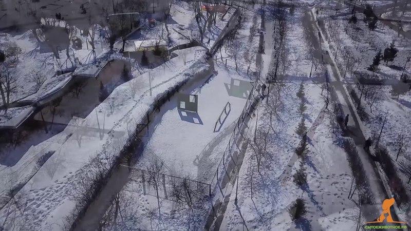 Площадка для выгула собак на в Александровский сад