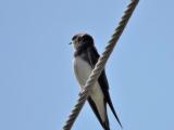 птицы певчие 5-часть Кенни Джи песня птиц mp4