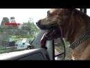 Пёс Дик. Я люблю гонять на машине