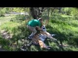 УДИВИТЕЛЬНЫЙ ЧЕЛОВЕК в вольере с только что родившей тигрицей ! Крым .Тайган