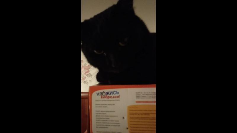 гайд: как снять кота со стелажа