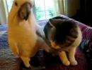 Попугай и кот. Вот эта любовь!