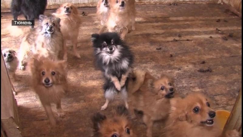 В Тюмени полицейские взломали собачий приют, чтобы спасти животных