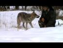 Хороший Егерь и с Волками в мире ...