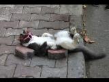Как нужно убегать от корейских уличных котов-гопников