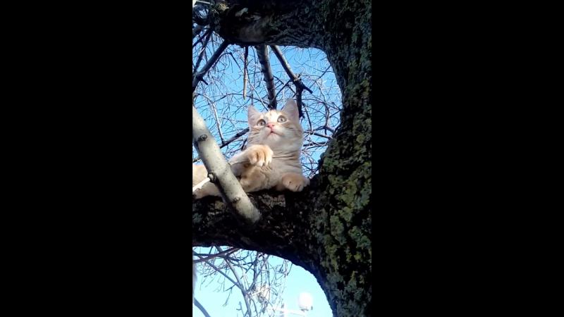 Кабардинский морской кот.)
