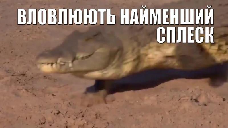 На сторожі кордонів України!