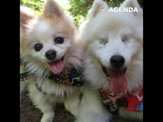 Дружба слепой и зрячей собаки