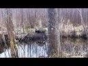 Охота 92 про законы, охота на бобра