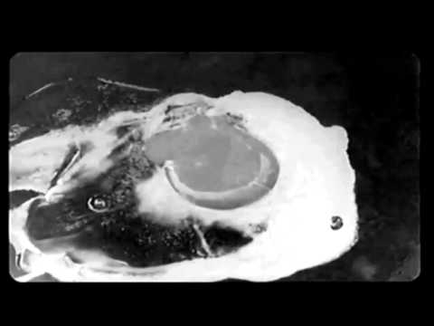 Abbas Kiarostami Lumiere Short Film