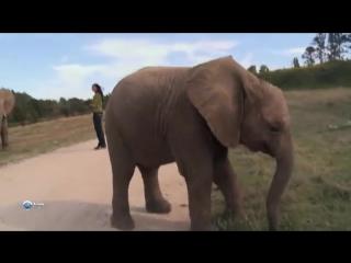 Мир африканских слонов. Познавательный фильм