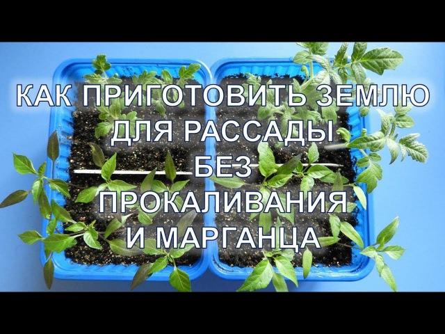 Как приготовить землю для рассады без прокаливания и марганца