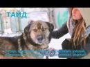 Екатеринбург Возьми собаку из приюта спаси ЖИЗНЬ