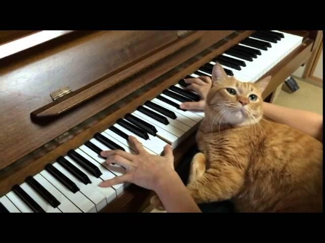 幻想即興曲(Fantasie Impromptu Op.66) ピアノ演奏中にネコ乱入!