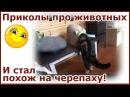 Самые смешные коты и кошки. Как большой кот в маленький домик залез. Лучшие приколы с котами.