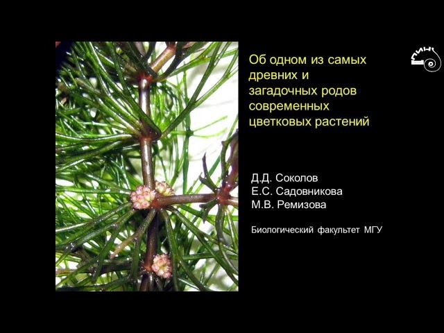 Дмитрий Соколов «Об одном из самых древних и загадочных родов современных цветковых растений»