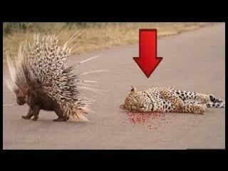 Những cảnh tượng giật gân chấn động thế giới động vật hoang dã| Amazing moments of wildlife animals