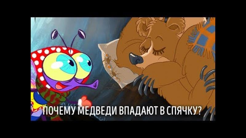 ПочеМуха - Почему медведи впадают в спячку? - развивающий мультик для детей