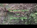 Зачем нужен рычаг или как легко убрать кустарник с приусадебного участка