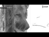 Яша Боярский Глаза собаки (сл.муз. Яша Боярский)