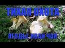 Сбор грибов 4 Лисички Белые грибы Подберёзовики Лес Жизнь в деревне