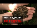 В Україні масово ТРУЯТЬ бджіл! РЯТУЙМО їх! бджола пасіка бджоли bee пчела ecocide екоцид Україна Ukraine