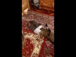 Кошка блошка мамуля для Васи