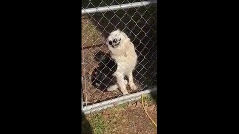 Осторожно! Во дворе злая собака!