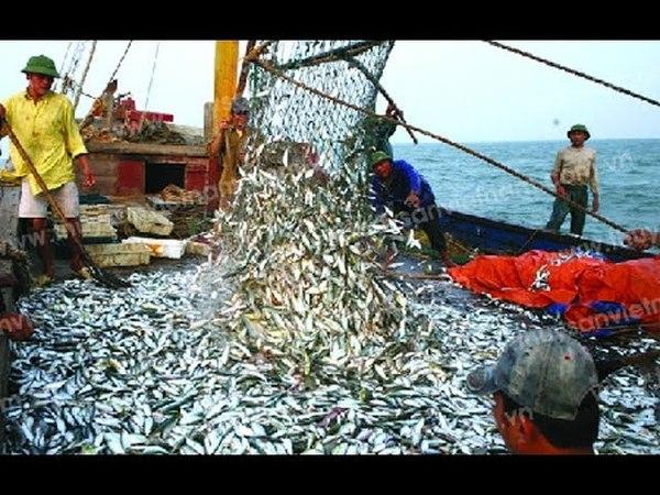 Nhật ký đi biển 2- đánh bắt cá trúng đàn cá trích khổng lồ