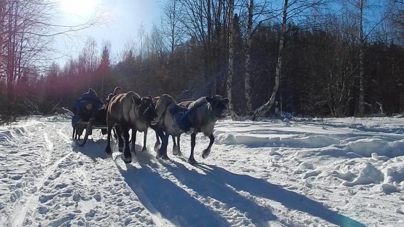 На олешках утром ранним мы поедем, мы помчимся! » Freewka.com - Смотреть онлайн в хорощем качестве
