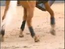 Самый дорогой конь на земле Мэрлин, красавец!