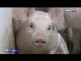 Новый виток санкционной войны: ЕС ждет от России компенсаций за свинину