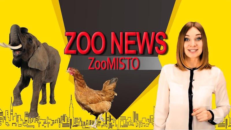 Курятник в Елисейском дворце и голодный слон | Новости из мира животных 3 | ZooMisto