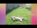 Забавные и Милые Собаки и Щенки. Очень милое видео
