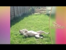 видео животные