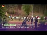 Соревнования по метанию елок прошли в Германии